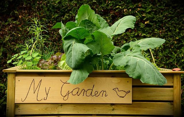 garden-1427541_640